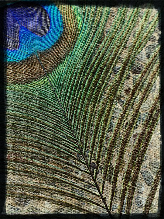 peacock feather upholstery